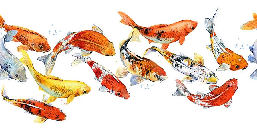 3 Boyutlu Duvar Kağıtları HD| Efsane Koi Balığı Duvar Kağıtları