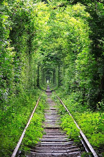 Tren Hattı Orman Tünel Duvar Kağıdı   Orman İçi Tren Yolu Duvar Kağıdı