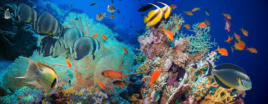 HD Deniz Hayvanları Duvar Kağıdı | Full HD Çocuk Odası Duvar Kağıtları | İzmir