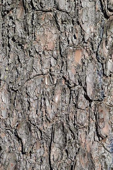 3D Eskimiş Ağaç Duvar Kağıdı | Efsane Ağaç Modelleri Duvar Kağıtları