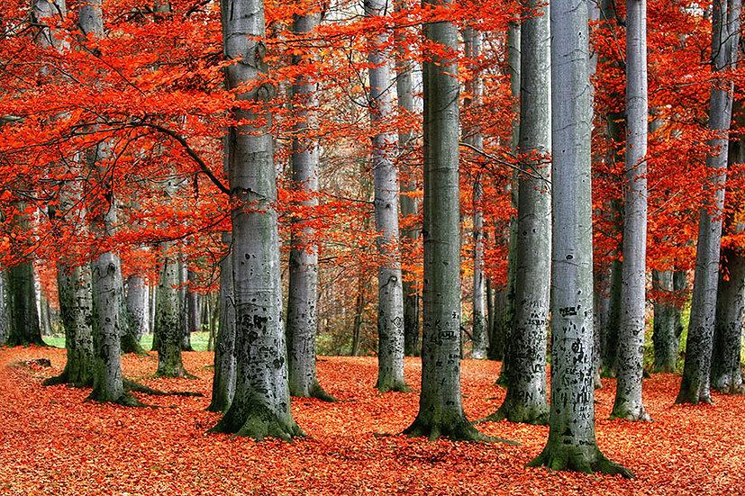 Kırmızı Yapraklı Orman Yolu Duvar Kağıtları | 3D Manzara Duvar Kağıtları