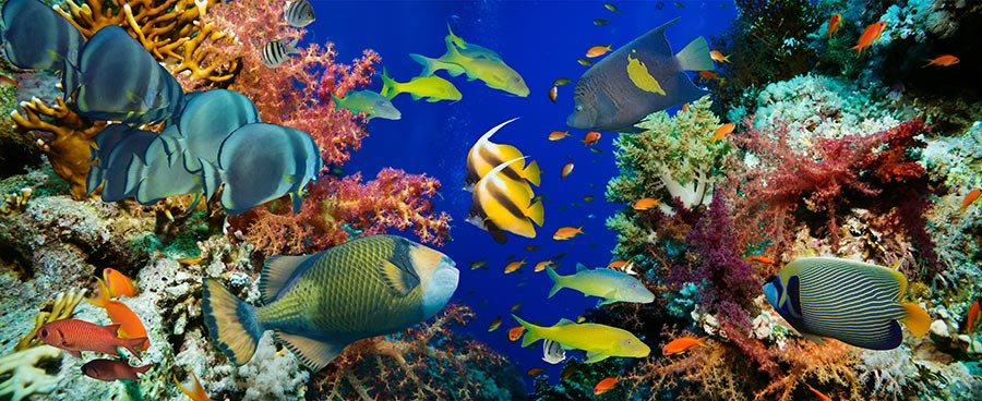 3 Boyutlu Balık Duvar Kağıtları | Full HD Sualtı Mercan Duvar Kağıtları