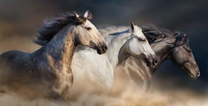 3 Boyutlu Atlar Duvar Kağıdı Örnekleri | At Resimli Duvar Kağıtları