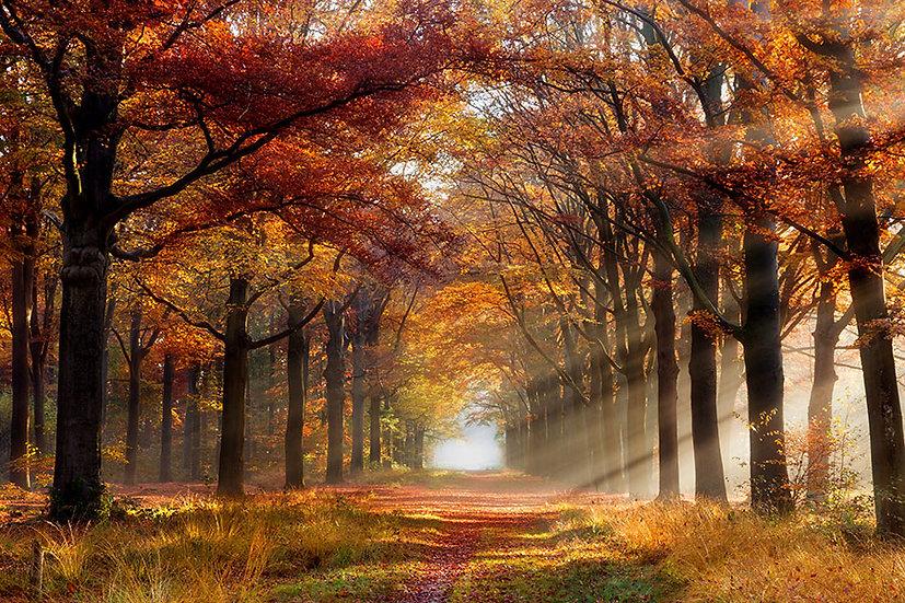 3D Hollanda Ormanı Duvar Kağıdı | Gün Batımı Sonbahar Duvar Kağıtları