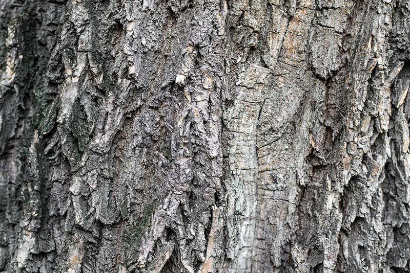 3D Ahşap Ağaç Duvar Kağıdı | Full HD Şekilli Yaşlı Ağaç Duvar Kağıtları