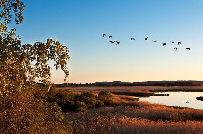 Göç Eden Kuşlar Duvar Kağıtları | 3D Sonbahar Gün Batımı Duvar Kağıtları