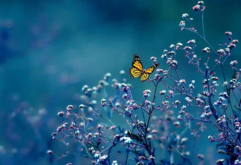 Kelebek Çiçekler Duvar Kağıtları