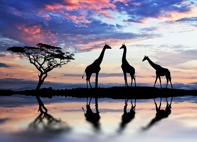 Zürafa Manzaralı Duvar Kağıdı | Zürafa Manzaralı Duvar Kağıtları Örnekleri