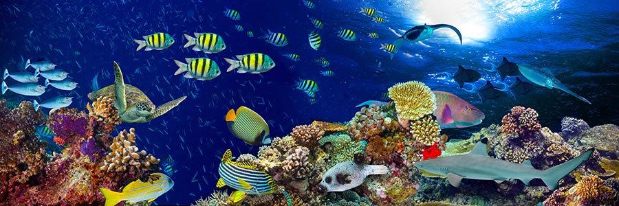 3 Boyutlu Duvar Kağıdı   Muhteşem Deniz Altı Mercan Balık Duvar Kağıtları