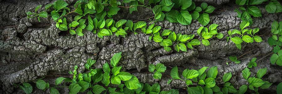 3D Yeşil Ağaç Duvar Kağıdı   Efsane Yapraklı Ağaç Görseli Duvar Kağıtları