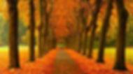 sonbahar-yürüyüş-yolu-duvar-kağıdı.jpg