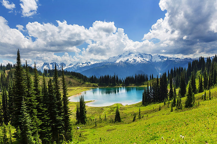 Göl Manzaralı Orman Karlı Dağ 3 Boyutlu Duvar Kağıdı