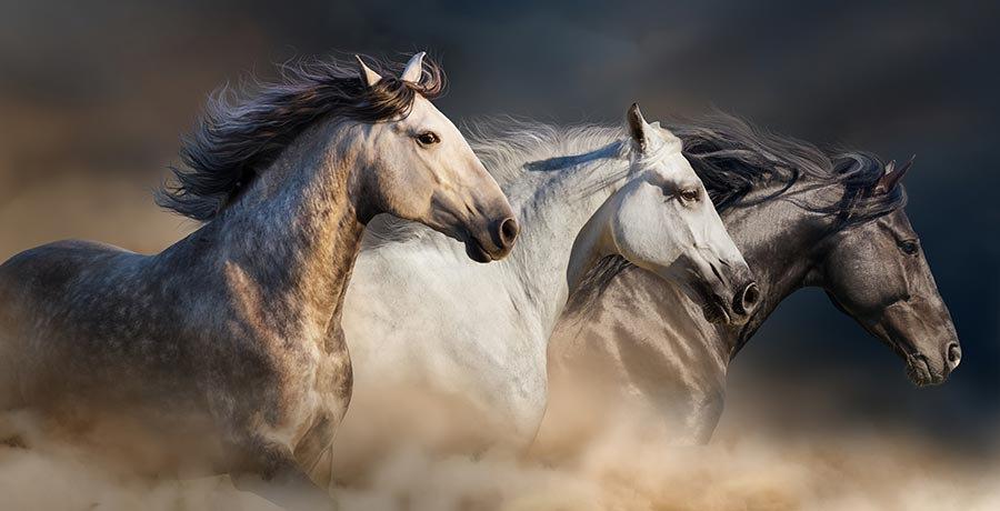 3 Boyutlu İtalya Kağıtları | Dokulu Koşu Yapan Atlar Duvar Kağıtları