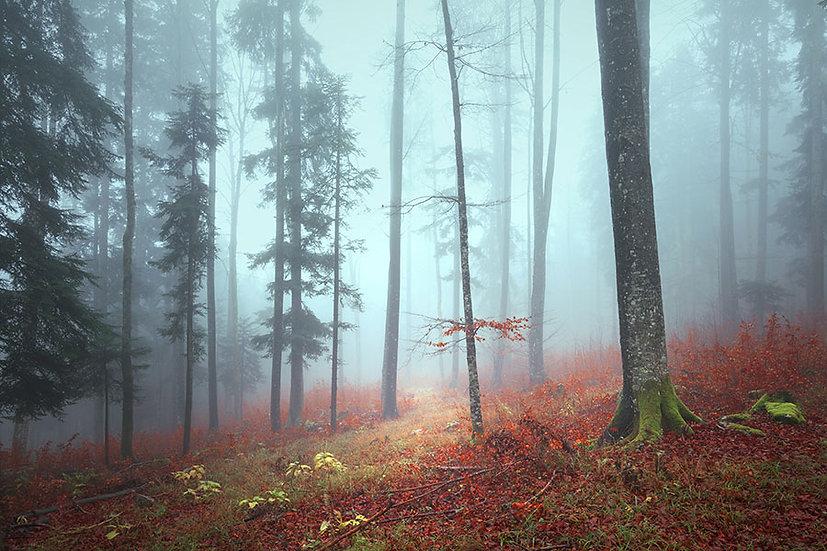3D Sonbahar Orman Manzara Duvar Kağıdı   Sisli Orman Duvar Posteri