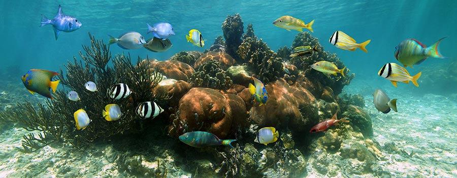 Mercan Balık Sürüsü Duvar Kağıtları | Dokulu Sualtı Panorama Duvar Kağıtları
