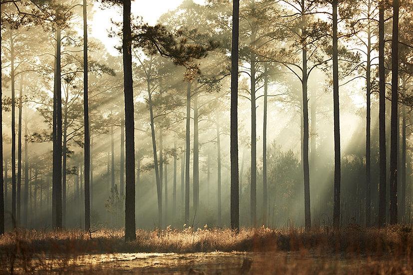 3D Sonbahar Ağaçları Duvar Kağıdı | Orman Güneş Yansıma Duvar Posteri