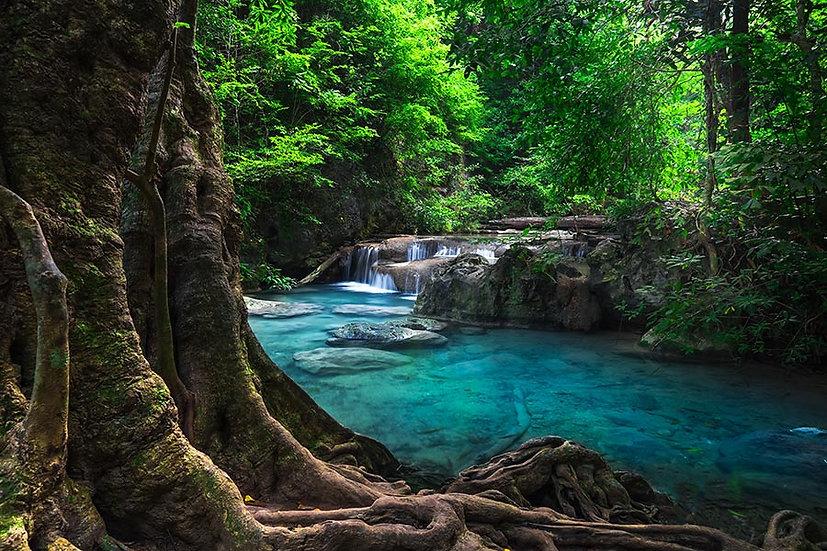 HD Tropikal Yağmur Ormanı Duvar Kağıdı | Full HD Yağmur Şelalesi Duvar Kağıtları
