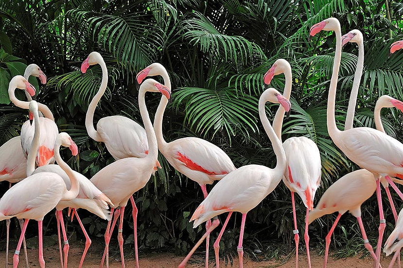 3 Boyutlu Hayvanlar Duvar Kağıtları | 3D HD Beyaz Flamingo Duvar Kağıtları