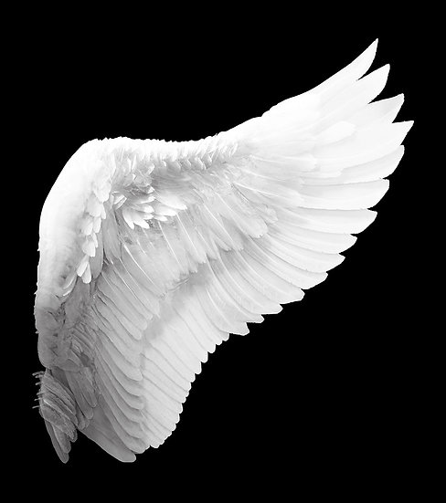 3D White Angel Duvar Kağıtları | Dokulu Melek Kanatları Duvar Kağıtları