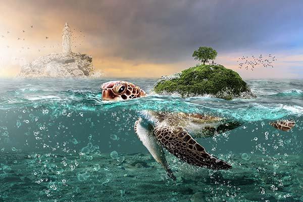 3D Animasyon Tortuga Duvar Kağıdı | HD Tortuga Duvar Posteri