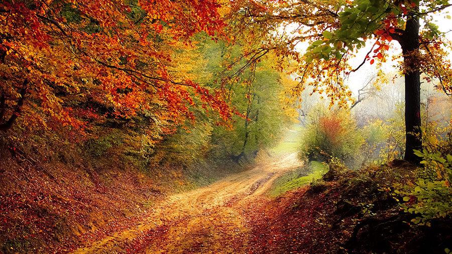 Sonbahar Duvar Kağıdı Posteri | Orman Yolu Manzara Duvar Modelleri