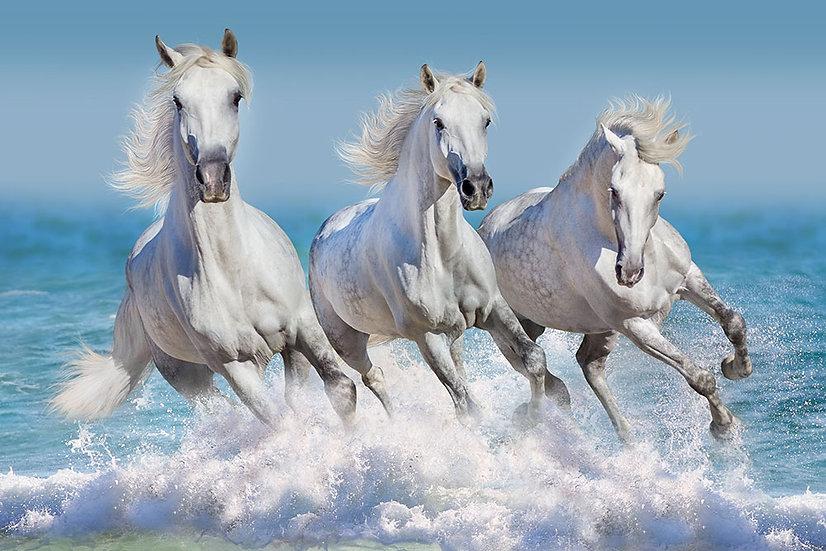 Su Üstünde Koşan Beyaz Atlar Duvar Kağıtları