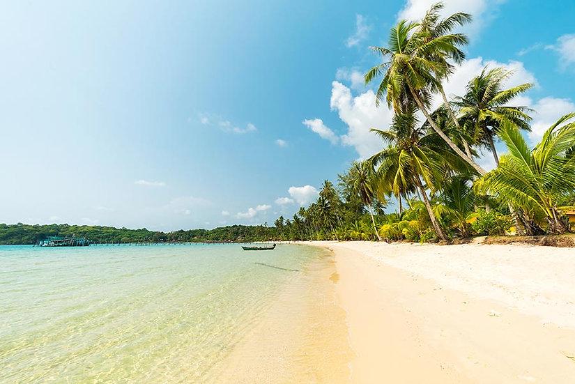 3 Boyutlu Palmiye Sahili Duvar Kağıdı | Muhteşem Manzara Duvar Kağıtları
