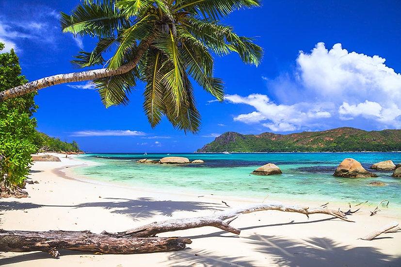 3 Boyutlu Deniz Duvar Kağıtları | Muhteşem Tropikal Sahil Duvar Kağıtları