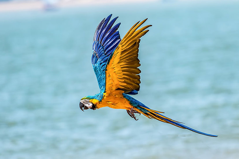 HD Uçan Papağan Duvar Kağıtları | 3 Boyutlu Papağan Duvar Kağıtları