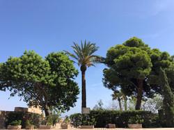 Palm Alcazaba of Almeria