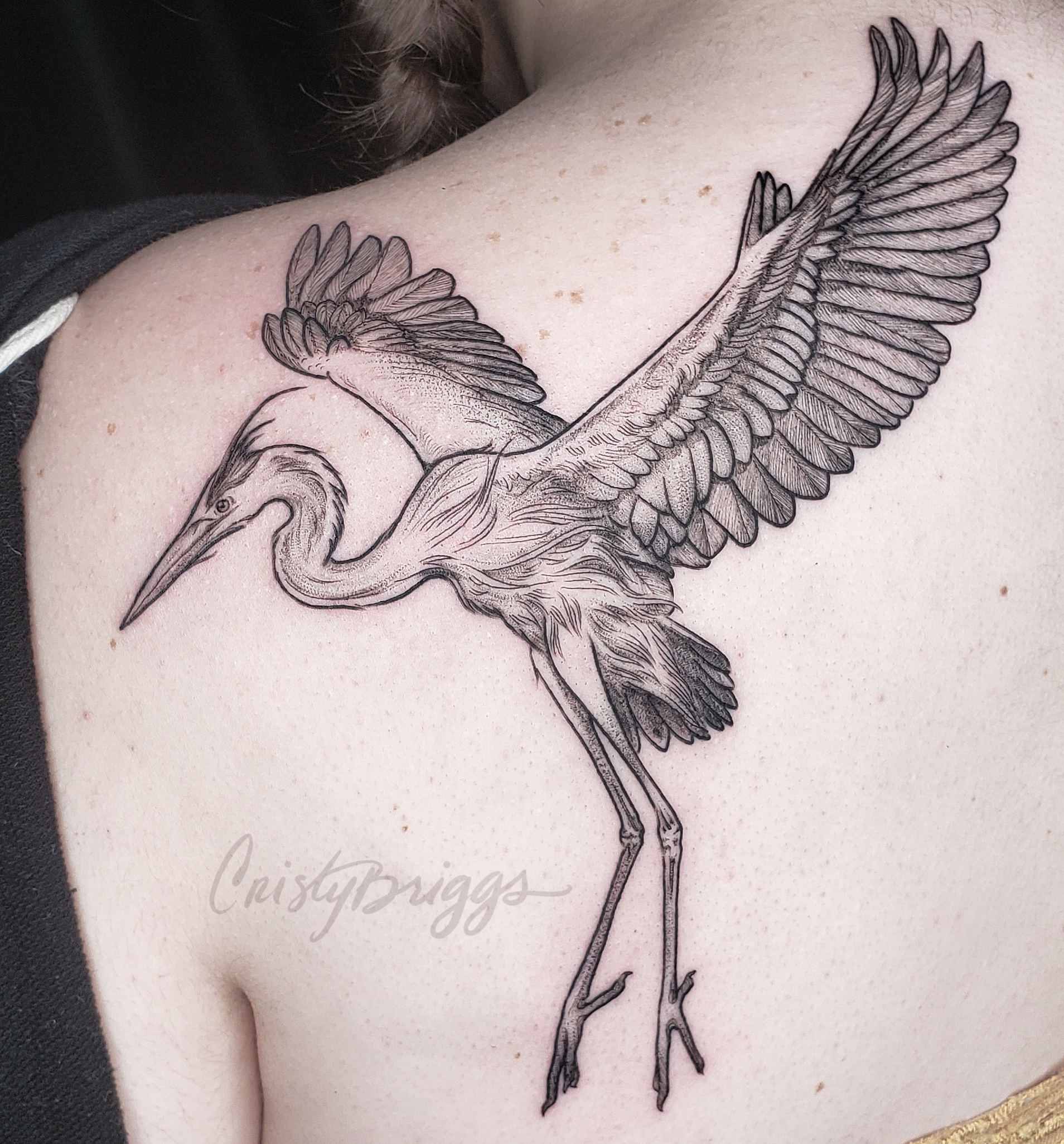 Blackwork great blue heron