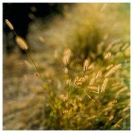 N41º46.717' W073º50.698' 9/24/04 446 ft. (Yellow Weeds CU)