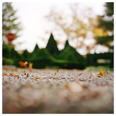N41º07.277' W073º29.460' 10/03/14 344 ft. (Topiary)