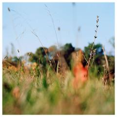 N41º07.215' W073º29.586' 10/15/15 269 ft. (Waveny Meadows)
