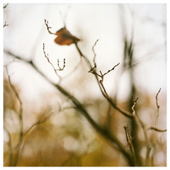 Fall Leaf/ Kinzu Dam, PA 10/26/97