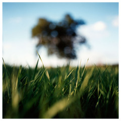 N41º46.689' W073º50.786' 9/1/05 439 ft.  (Grass and Tree)