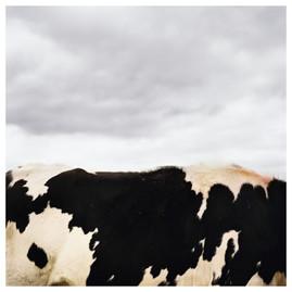 N41º46.555' W073º50.997' 10/17/04 421 ft.  (Cow in Clouds)