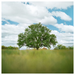 N41º07.236' W073º29.384' 5/12/17 302 ft. (Waveny Tree & Clouds)
