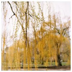 BPG #5 (Yellow)/MA 4/4/00