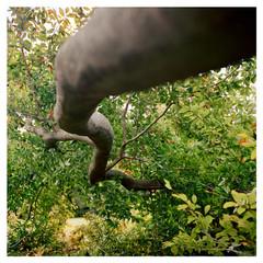 N41º08.884' W073º30.477' 10/26/18 381 ft. (Irwin Fallen Branch)