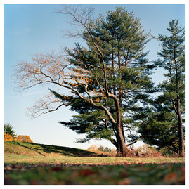 N41º08.931' W073º30.593' 11/2/16 383 ft. (Irwin White Pines)