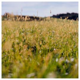 N41º46.873' W073º50.764' 9/24/04 455 ft.  (Tall Yellow Weeds)