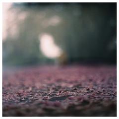 N41º08.722 W073º30.062' 5/9/08 258 ft.  (Pink Haze)