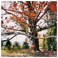 Swing/ Norwalk, CT 10/18/98