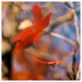 Reds/ East Hampton, NY 11/23/01