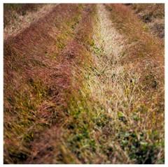 N41º46.712' W073º50.717' 9/6/04 450 ft.  (Red Grasses)