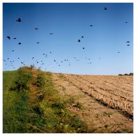 N41º46.868' W073º50.853' 9/23/04 461 ft.  (Birds)