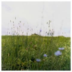 N41º46.552' W073º50.966' 7/16/04 422 ft.  (Wild Flowers)