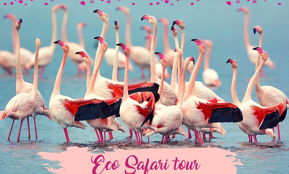 voucher Ecosafari tour | San Valentino edition