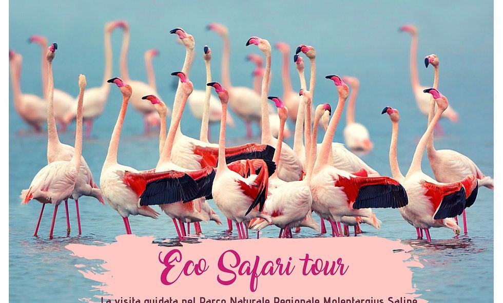 Buono regalo Ecosafari tour
